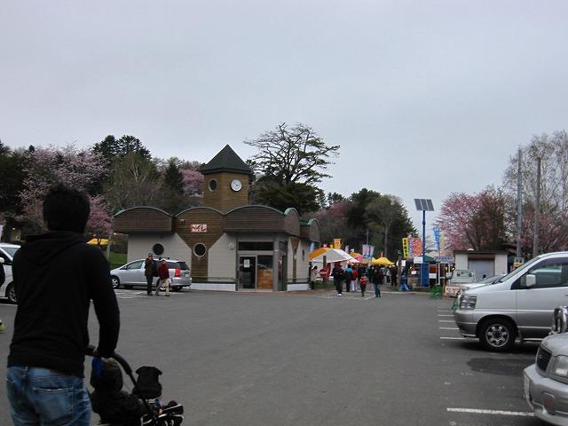 厚岸 桜祭り