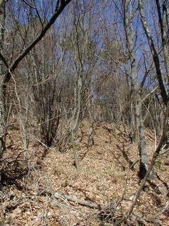 葉が落ちた雑木林