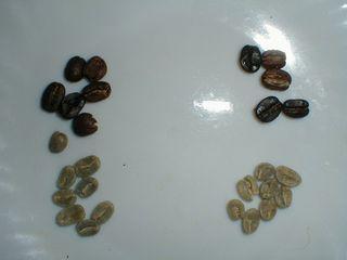 キリマンジャロ豆とコロンビア豆