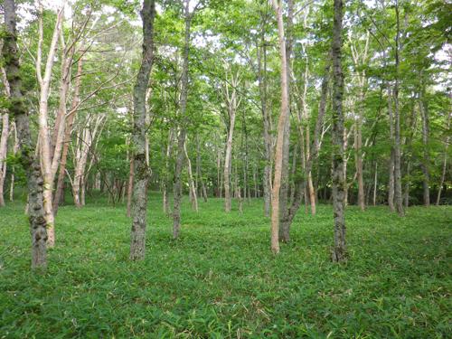 11.7.28塩場の林