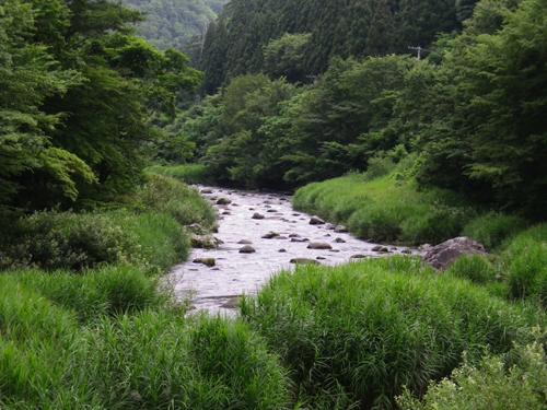 11.7.28川ヨシ~