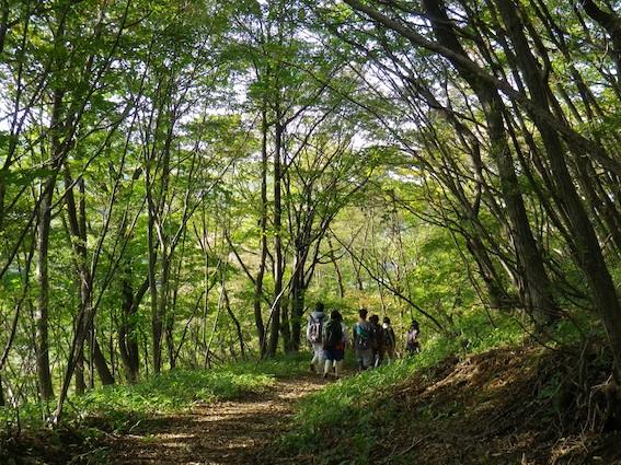 11.10.10林を歩く2