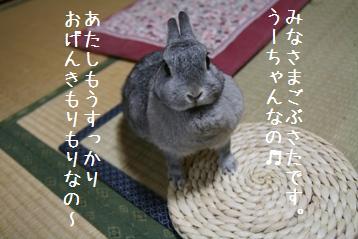 20080727_2.jpg
