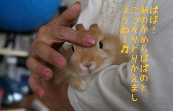 20080729_10.jpg