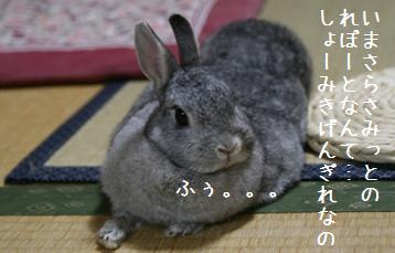 20080729_13.jpg