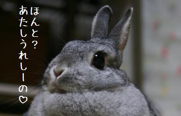 20080729_15.jpg
