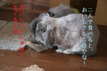 20080729_8.jpg