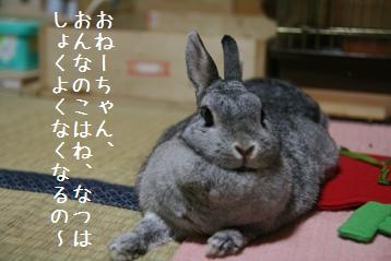 20080802_2.jpg