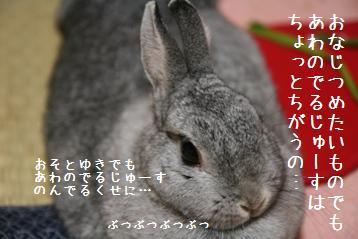 20080802_5.jpg