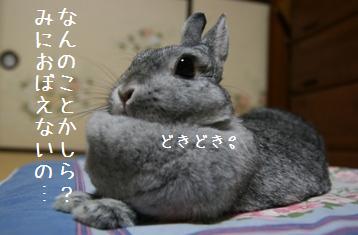 20080805_2.jpg