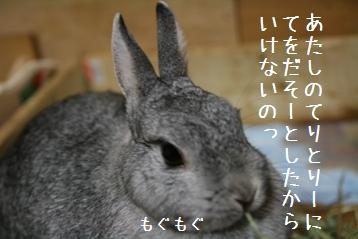 20080805_3.jpg