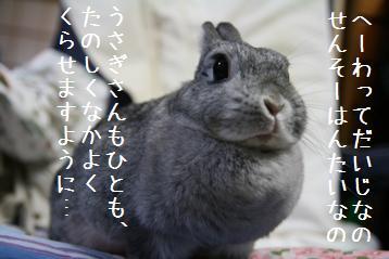 20080815_3.jpg