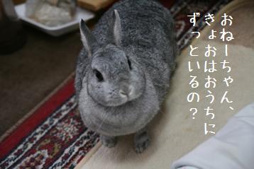 20080817_2.jpg