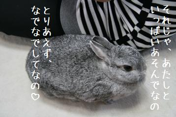 20080817_3.jpg