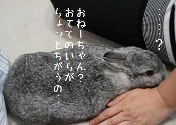 20080817_4.jpg