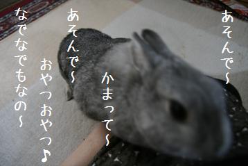 20080823_3.jpg