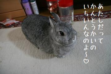 20080823_9.jpg