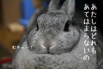 20080828_2.jpg