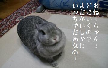 20080828_5.jpg