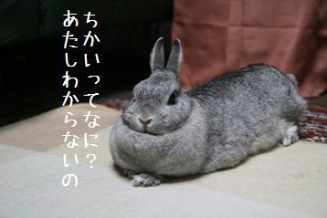 20080831_1.jpg