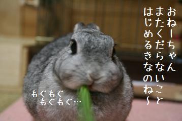 20080904_2.jpg