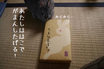 20080904_5.jpg