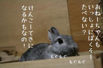 20081014_1.jpg