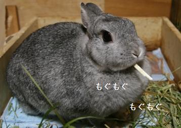 20081016_3.jpg