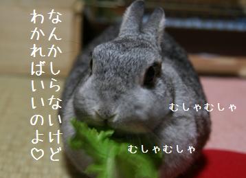 20081016_4.jpg