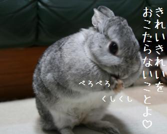 20081019_5.jpg