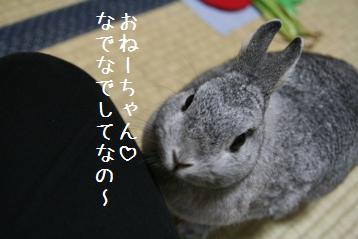 20081021_2.jpg
