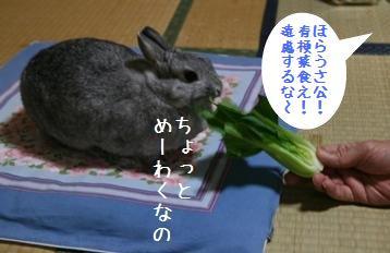 20081021_4.jpg
