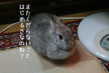 20081112_1.jpg