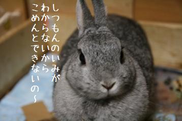 20081112_3.jpg