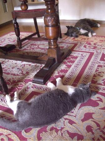 JuJu & Terra July 2009