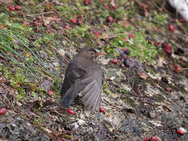 サンマリノの鳥1