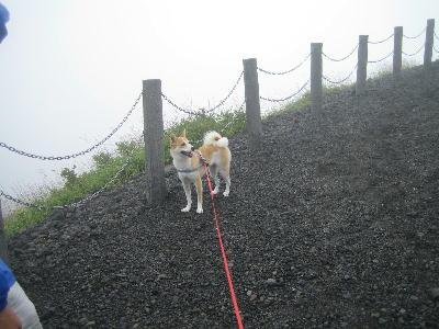 崖に興味深々花ちょん