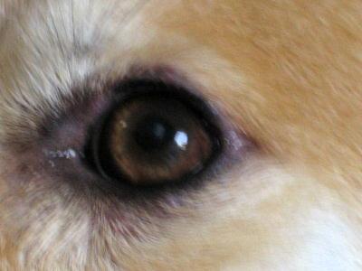 0821花ちょんの左目