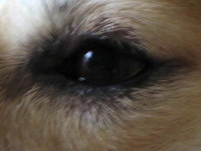 2008年8月21日はなちょんの左目