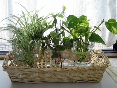 寝室の観葉植物