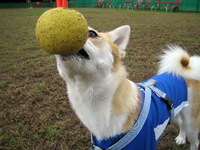 ボール喰い競争