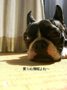 コピー ~ CIMG4120