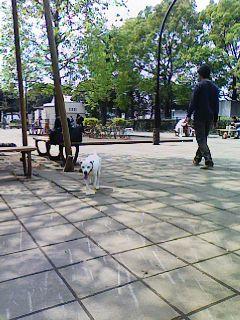 駒沢公園ドックラン