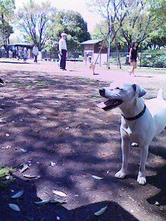 昭和記念公園ドックラン