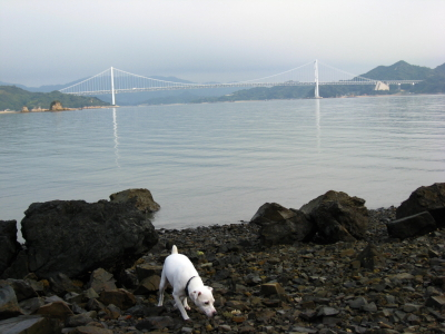 朝の因島大橋