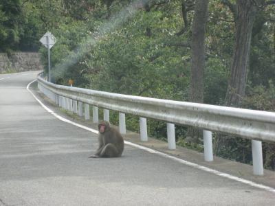 お猿に注意