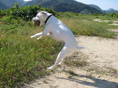 ジャンプジャンプジャンプ