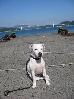 桟橋から因島大橋