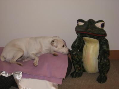 蛙のコレクション
