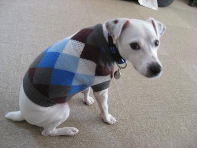 セーターはいかが